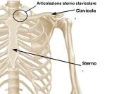 Anatomia-collo-clavicola-sterno