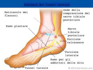 piede-caviglia-tibiale-posteriore