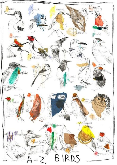 A - Z of Birds