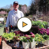 Cool Weather Herbs & Vegetables with Decker's Nursery