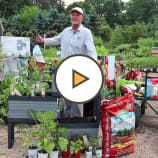 Planting herbs & vegetables in an elevated garden