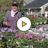 Sun and Shade Perennials on display now at Decker's Nursery