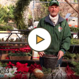 Drop-in Pots for Holiday Container Gardening