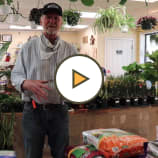 Organic Lawn Care Tips with Decker's Nursery