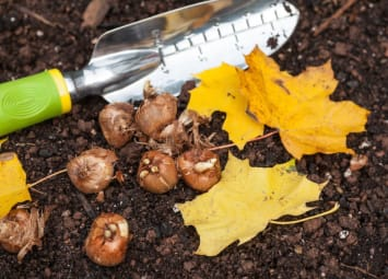 Fall Gardening is the Perfect Time for Planting