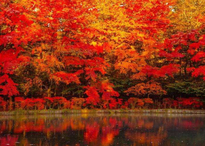 【2021年版】秋の軽井沢は魅力満載!イチオシ紅葉スポットと見頃・時期もご紹介