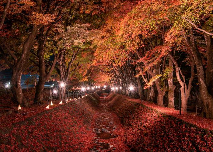 【2021年版】富士山×紅葉を楽しむ名所10選!見頃時期もご紹介
