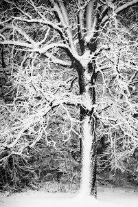 Winter-cran-19-copy_ccudql