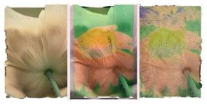 Cone-flower-tripych-final-copy_lmmpod