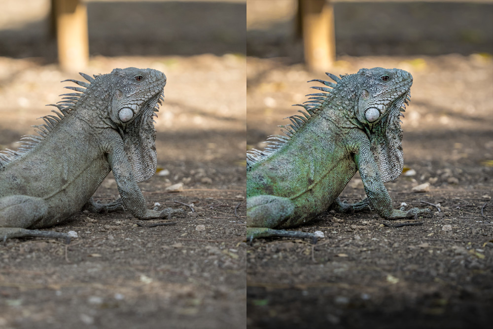 An example of JPG (left) and RAW (right). Image from photofocus.com.