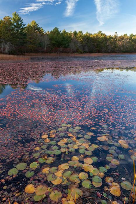 Myles Standish State Forest - Ron Wilson