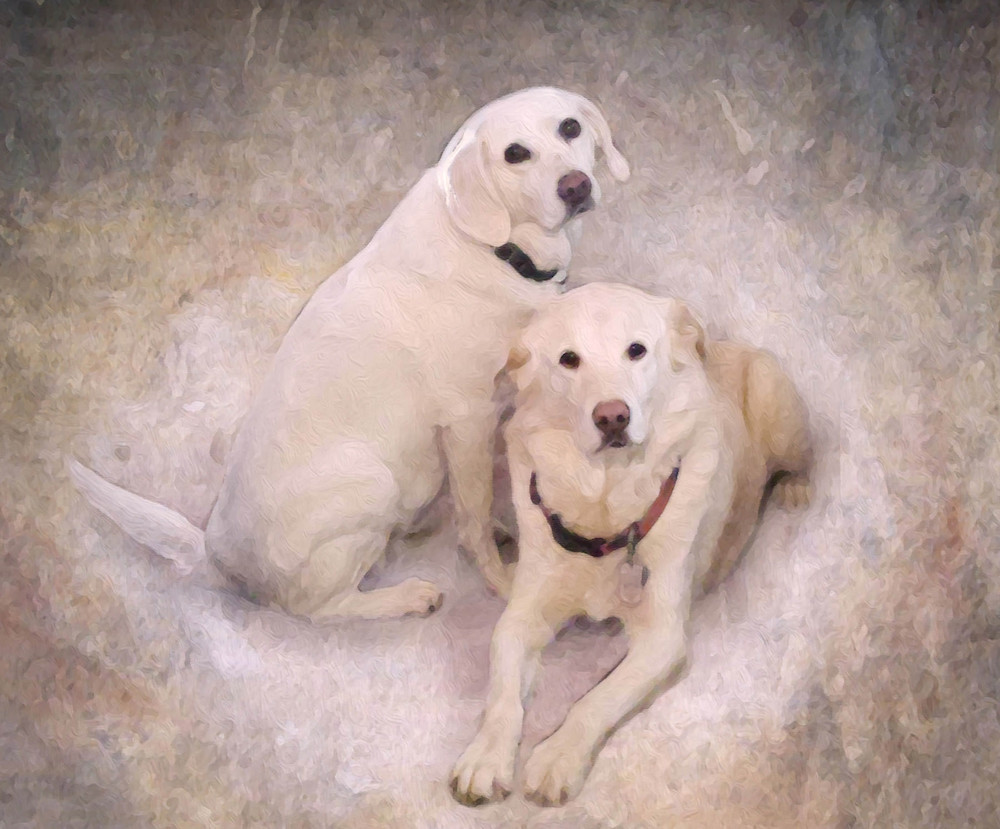 Pair of light colored dogs