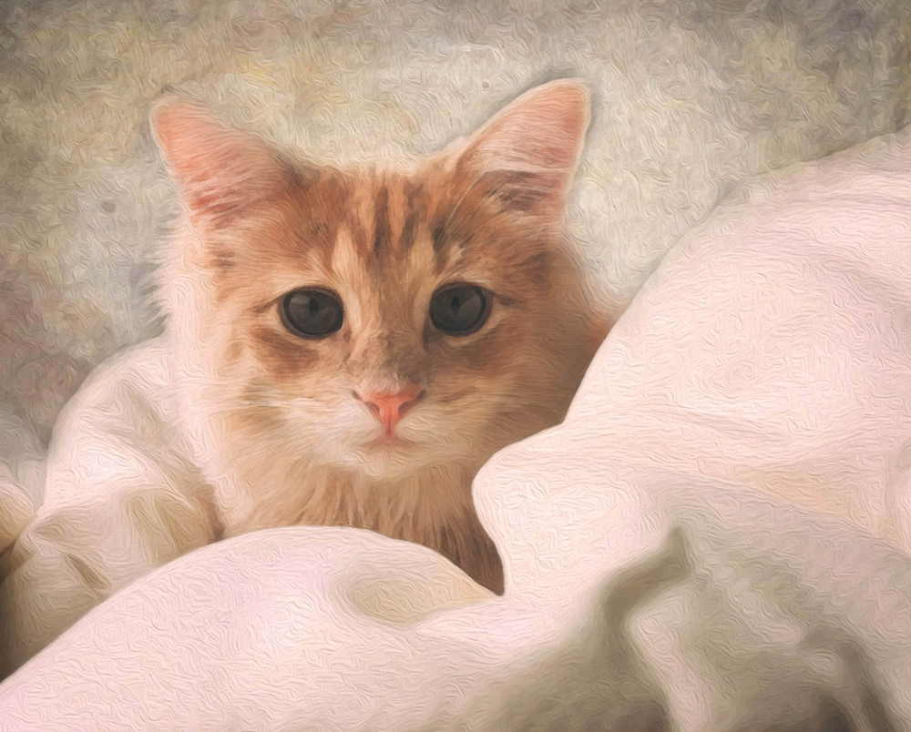 Sweet young cat nestled in covers