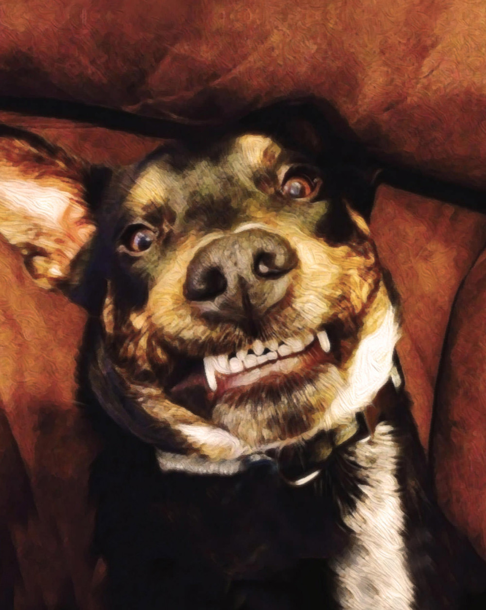 Funny faced smiling dog