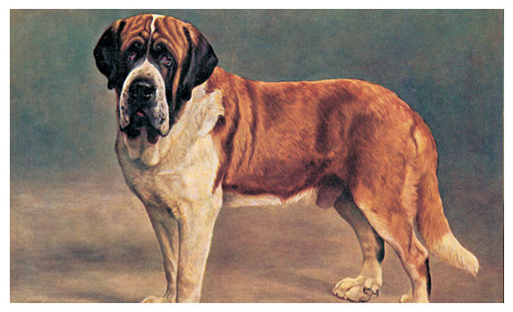 Smooth Coated Saint Bernard by Lilian Cheviot