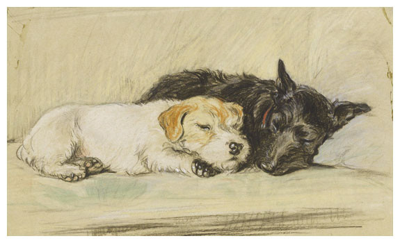 An Afternoon Nap, Wire Hair and Scottish Terrier by Lucy Dawson