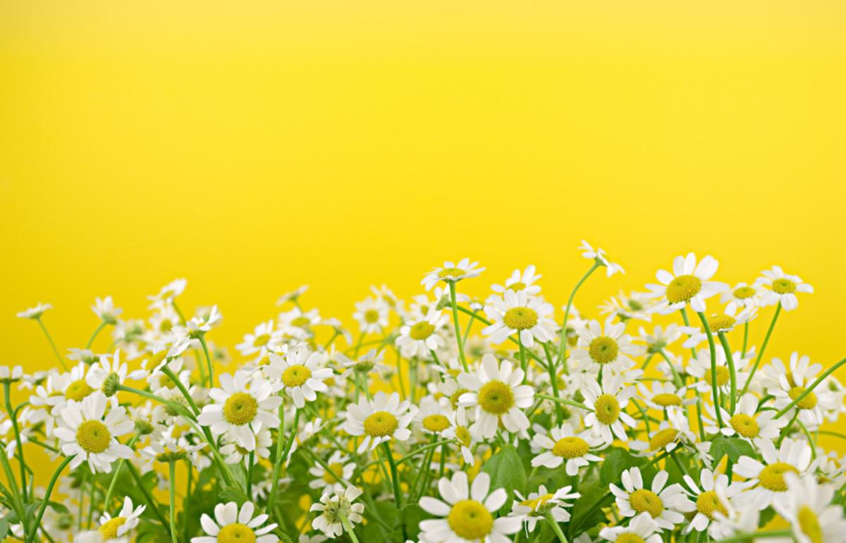 Yellow_field_sml_wmlr1x