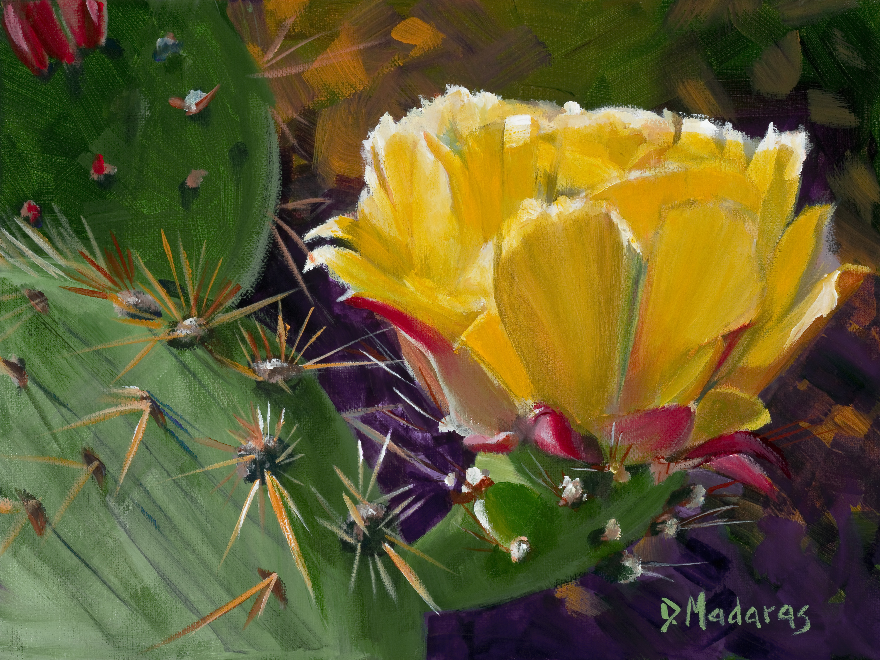 Prickly_pear_bloom_by_diana_madaras_copy_apfty2