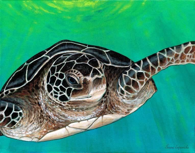 Turtle-talk-_web-30-600px_ezd9zd