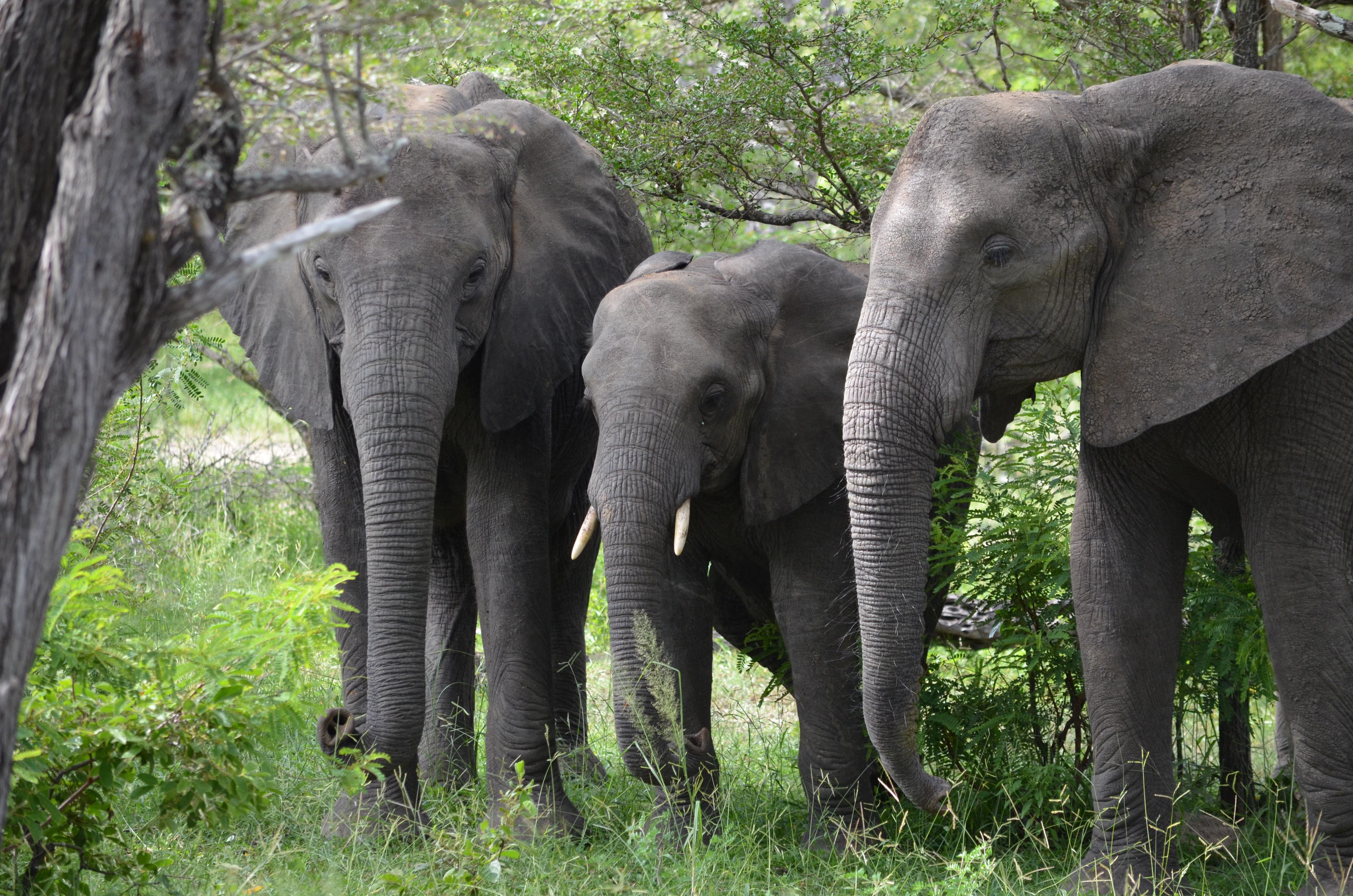 group of elephants representing family safari at msafiri travels