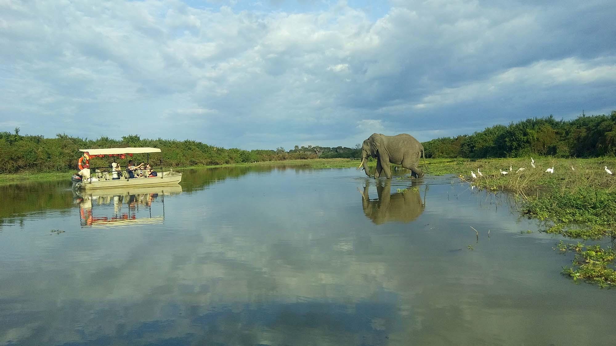 boat safari at selous game reserve msafiri travels