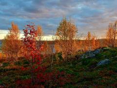 Температура воздуха в Мурманской области не поднимется выше +12