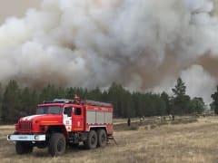 Мурманчан предупредили об опасностях в лесу