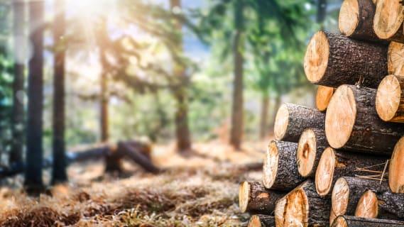 Die EU-Länder und die Schweiz fördern die Verfeuerung von Holz mit viel Geld. Bild: Shutterstock