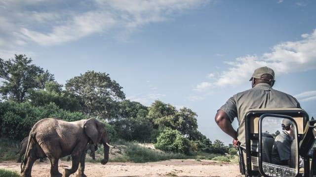 Keine Jagdtrophäen mehr für die Schweiz: Ein Afrikanischer Elefant in Südafrika. (Bild.Shutterstock)