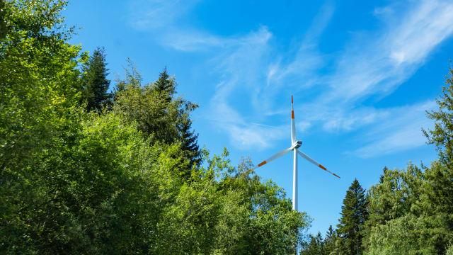 Jedes fünfte neue Windrad in Deutschland wird in den Wald gebaut. Bild: Shutterstock
