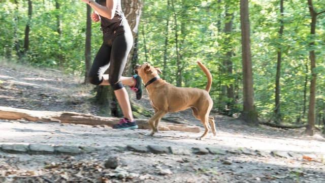 Hunde und Jogger: Es ist kompliziert. Foto: Shutterstock