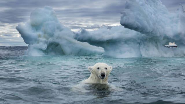 Harte Zeiten für Eisbären? Ursula von der Leyen wird ihm nicht helfen können.