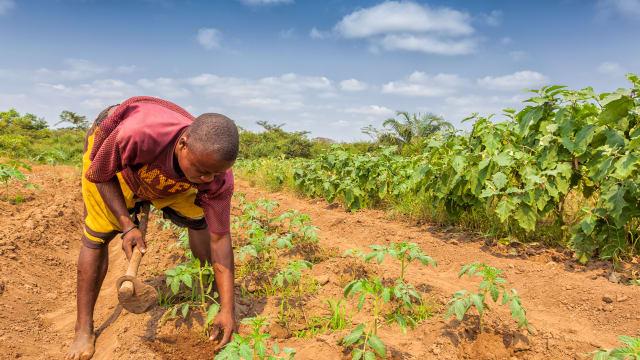 Europäische Agrarpolitik steht in einem zynischen Widerspruch zur europäischen Entwicklungshilfe.