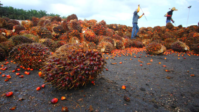 Palmöl ist eine der Rohstoffe für Biodiesel. Bild: Shutterstock