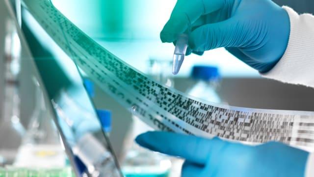 Das Gentech-Moratorium betrifft immer mehr biotechnologische Innovationen. Bild: Keystone