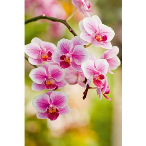 Floragard Orchideenerde  1064585