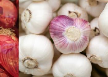 Ilustirasi kentang dan bawang merah. Int