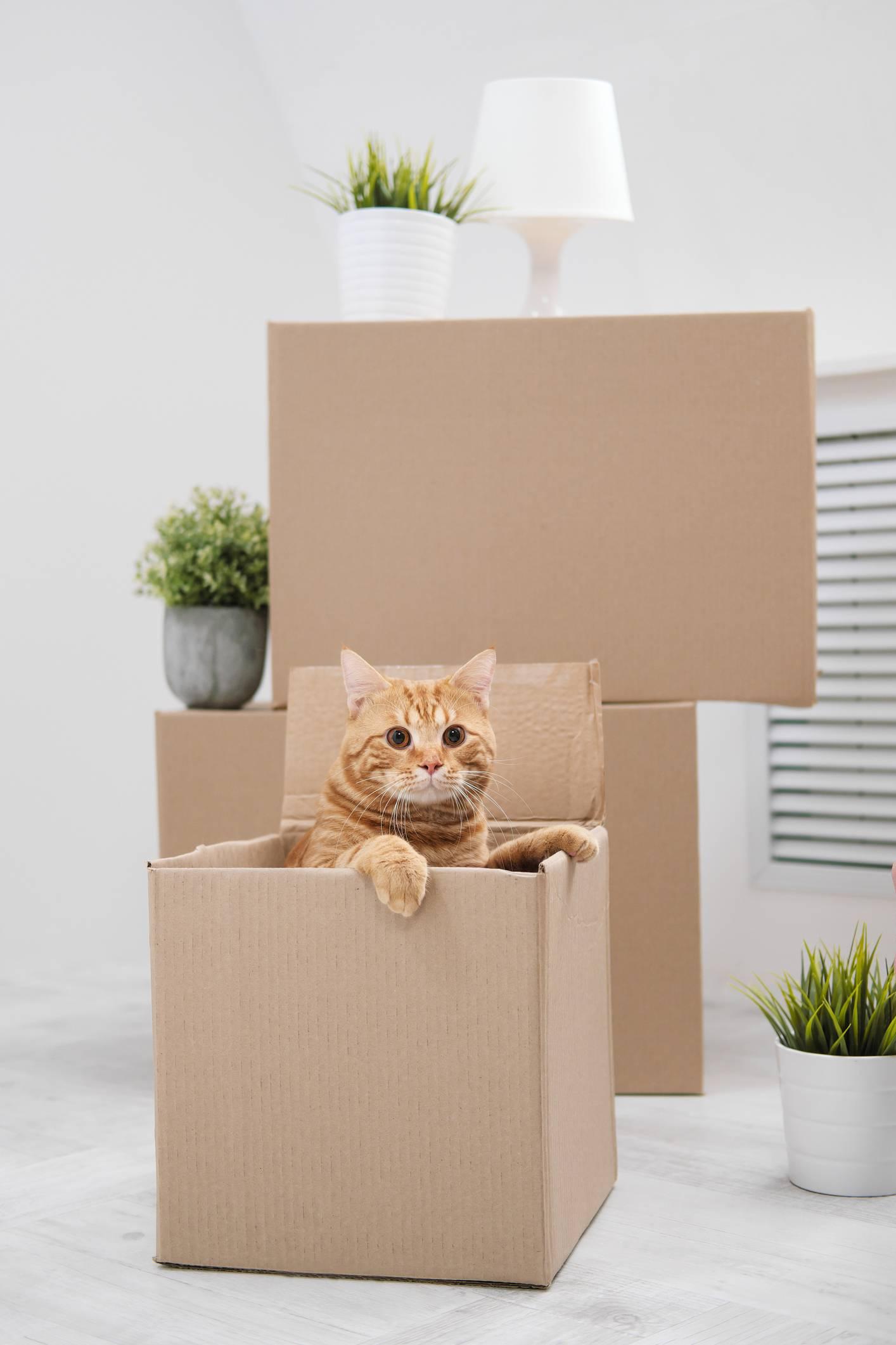 Comment s'occuper de son chat pendant un déménagement ?