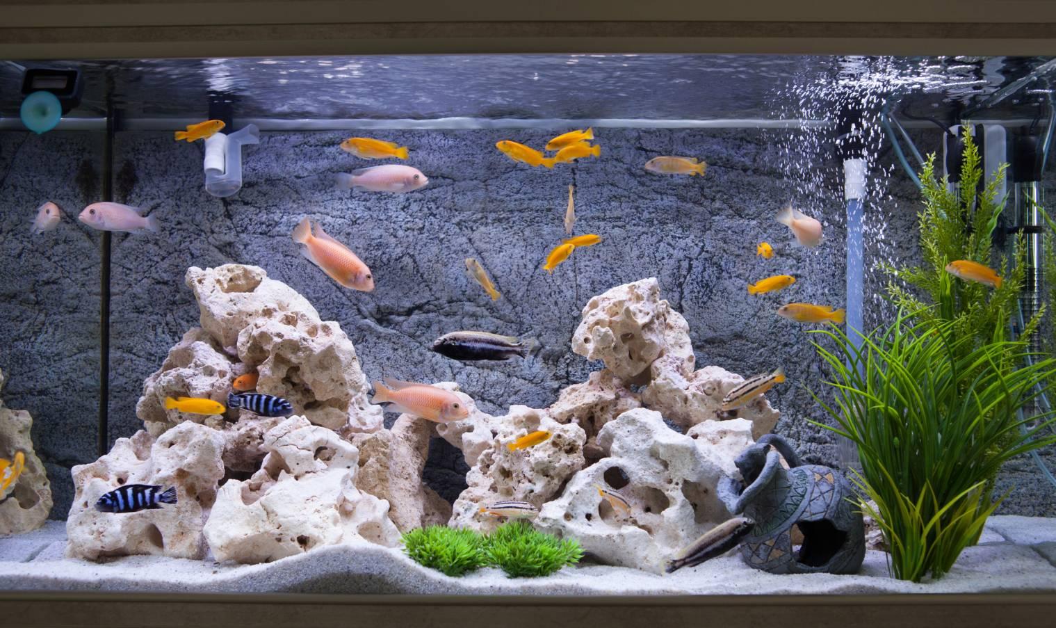 Comment déménager un aquarium avec précaution ?