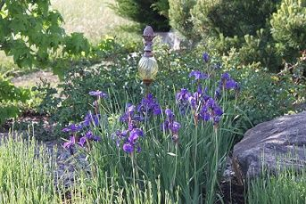 gartengestaltung blaue Iris