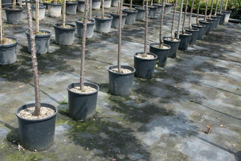 Beispielfoto einer Baumschule
