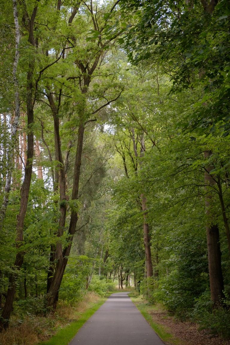 Radweg durch einem Wald