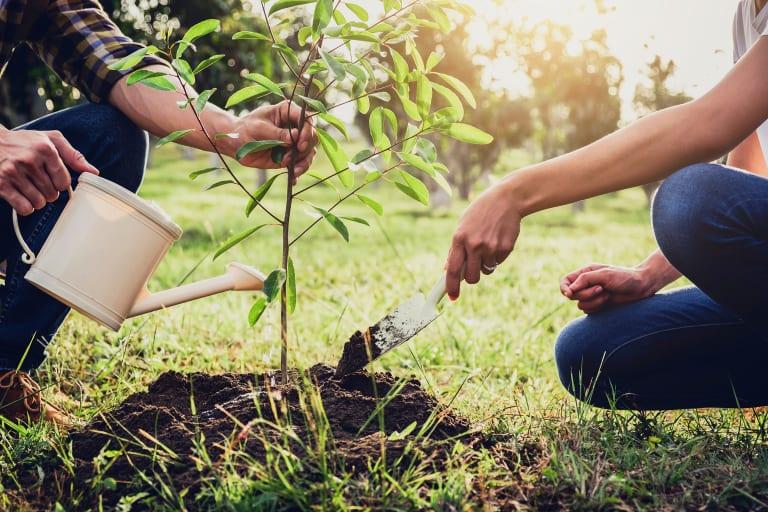 Junge Eltern, die im Garten zusammen einen Baum pflanzen.