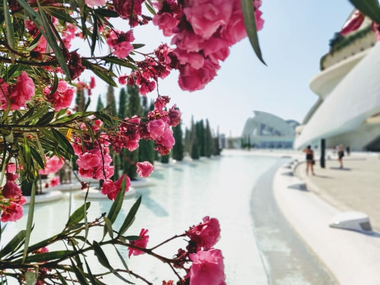 Bild von Valencia mit Blumen im Vordergrund