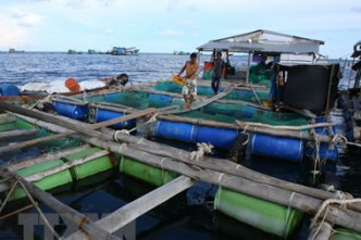 Draft strategy targets Vietnam's leading position in Asian mariculture