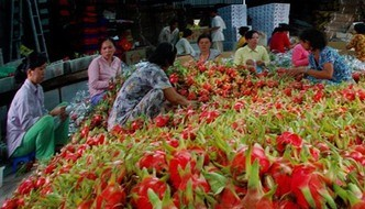 VN fruits need to gain domestic market before exporting: experts