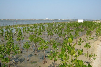 Mekong Delta ready for fight against climate change