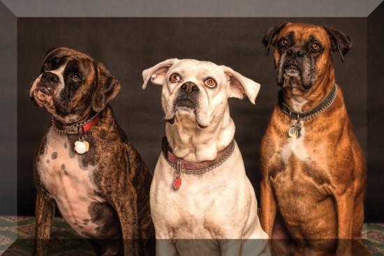 Finetuned Bevel to three-dogs