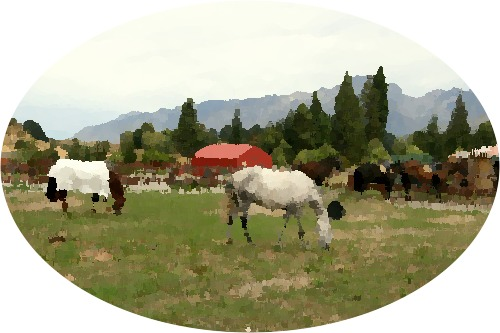 Oil paint effect of the horses photo