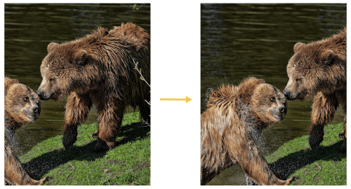 Comparison of Cloudinary's g_auto:classic and g_auto:subject Transformations Using an Image of Two Bears